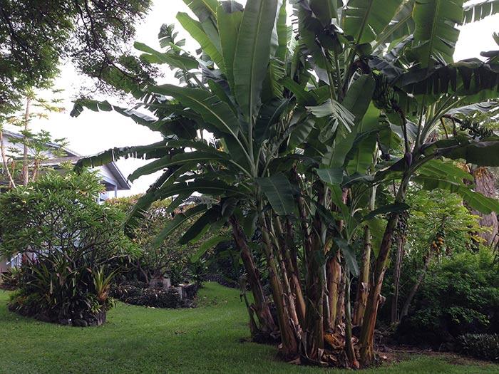 Garden2IMG_3783