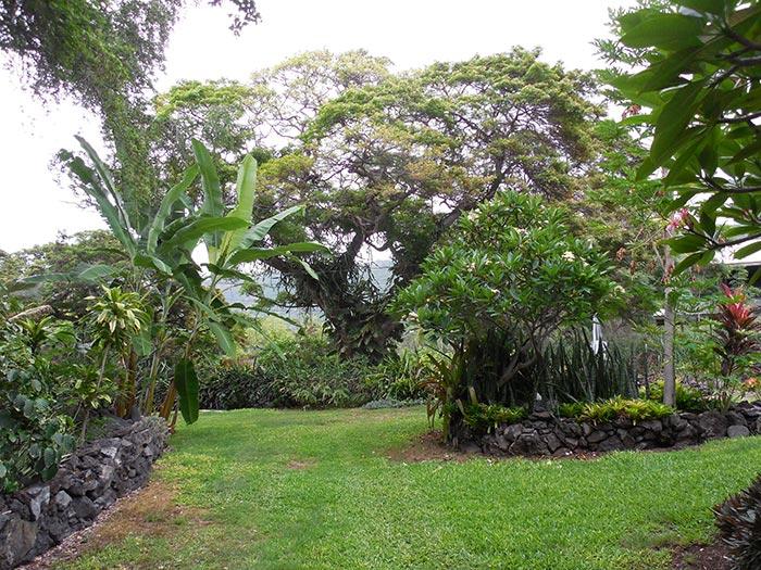 Garden4DSCN1544