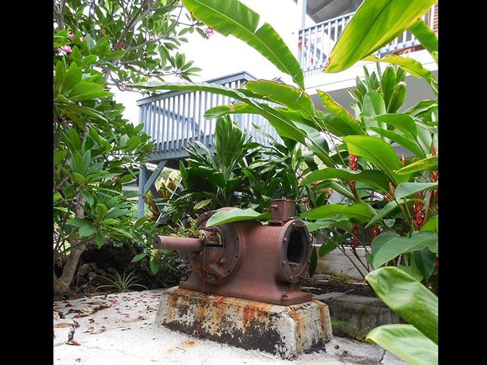 Garden5DSCN1543