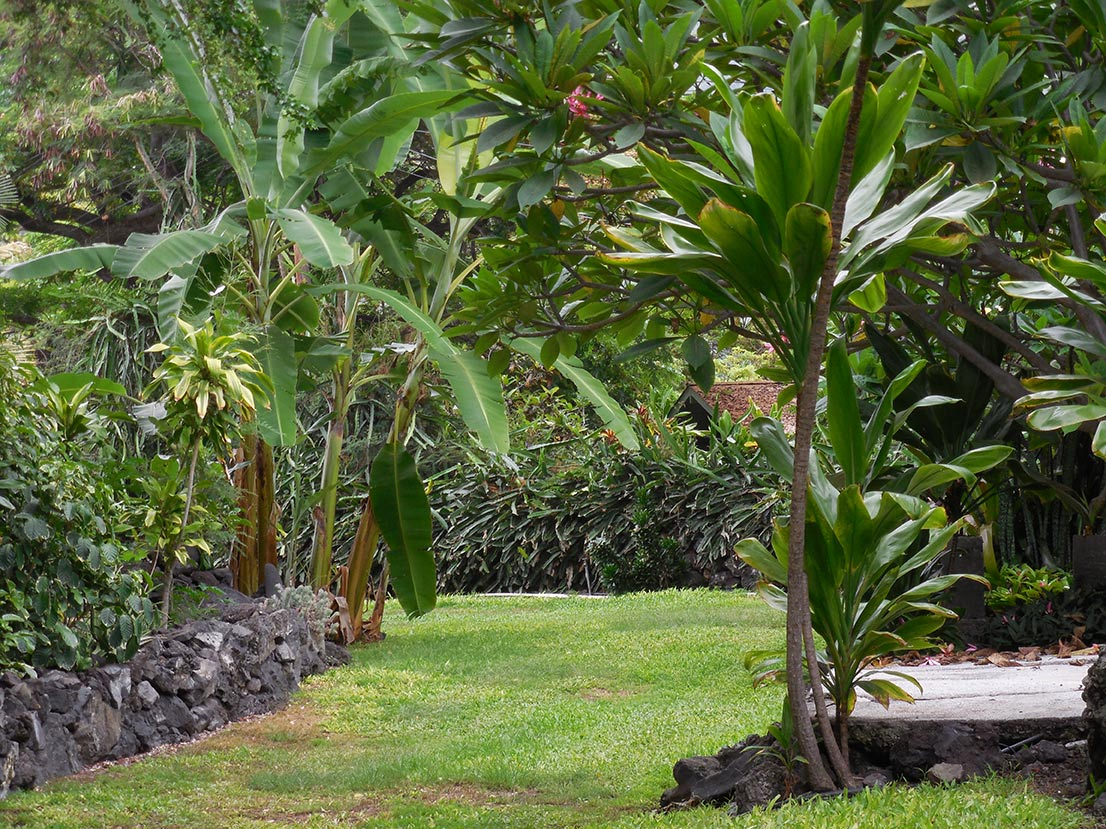 gardenDSCN1540